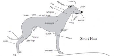 Kangablue Australian Cattle Dogs