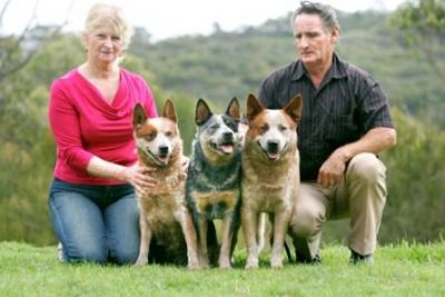 Australian Cattle Dog Society Of Nsw Inc