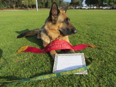 German Shepherd Dogs - Kazkiri Janti